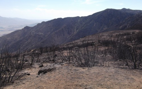 Laguna Fires 1