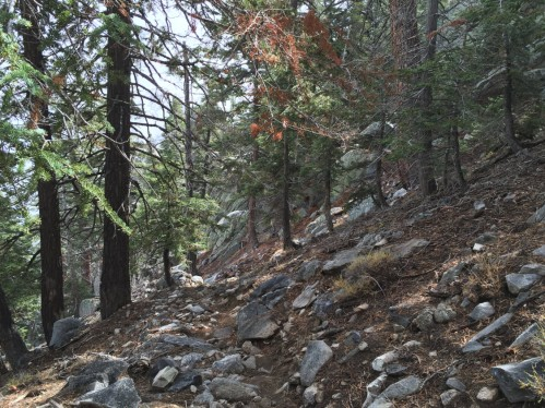 C2C - trail