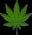 cannabis-303914_640